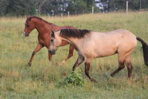 6 Tips to Help Your Horse Feel Amazing
