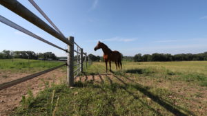 3 Things to Consider When Choosing Where to Board Your Horse