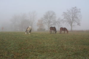Greener Grass – Planting The Right Pasture For Your Horses