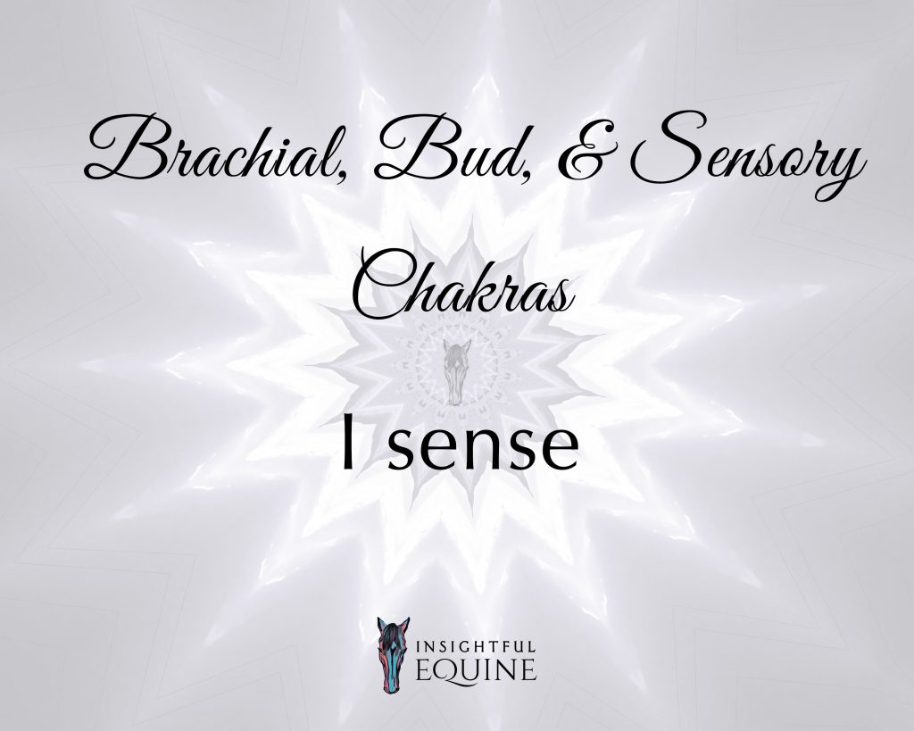 Learn about the additional chakras that horses have and how they use them in the Insightful Equine Inspiration Gallery.