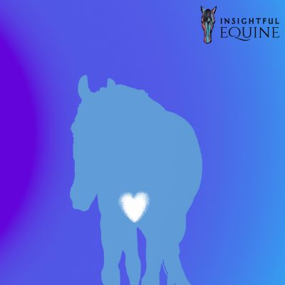 Top tips to show your horse love and appreciation