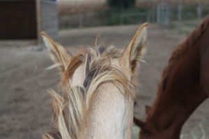 The Mane & Tail Brush That's Driving Your Horse Crazy