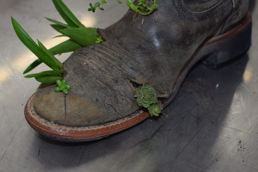When your riding boots are far beyond saving it's time to repurpose them. Give those well-loved boots new life by turning them into a succulent planter. They're the perfect way to remember all the great rides you had in them.