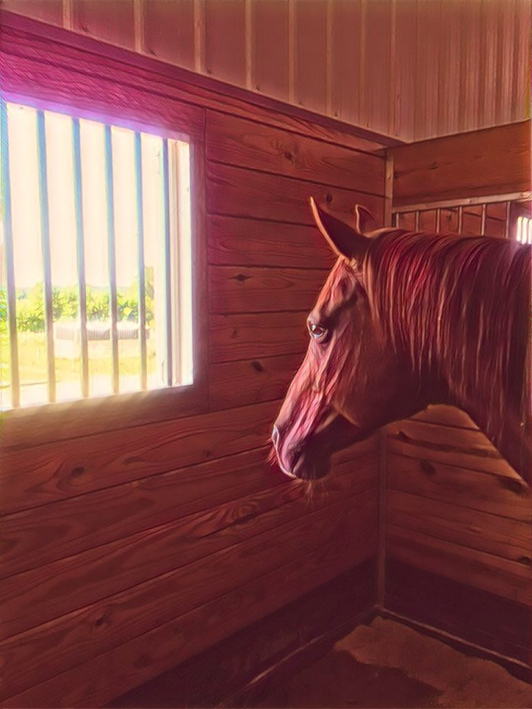 Does Your Horse Really Need A Room With A View?