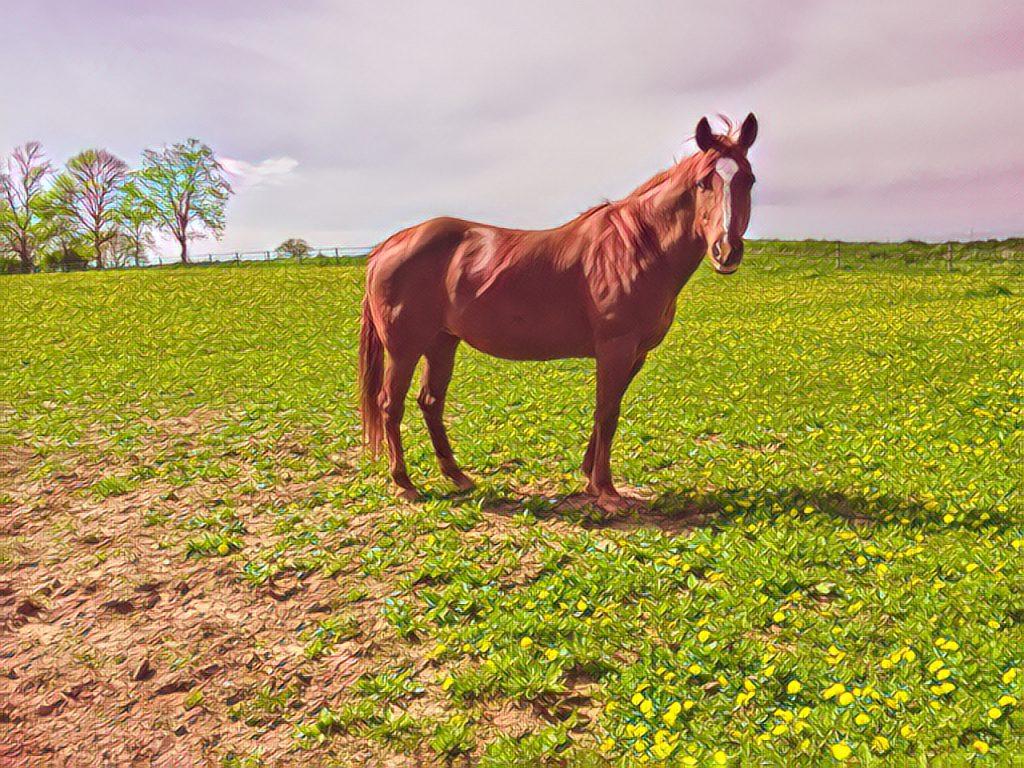 Dandelions In The Pasture – Friend or Foe?