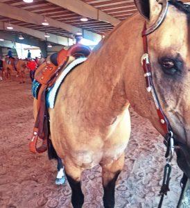 Do Horses Like Being Ridden?