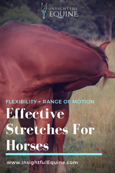 Insightful Equine is filling you in on how to optimize your horse's stretches to increase their flexibility and range of motion.