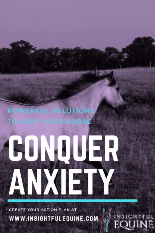 Use these powerful, positive solutions to help your horse overcome anxiety. The perfect strategies to restore balance and relieve worry for a happier horse.
